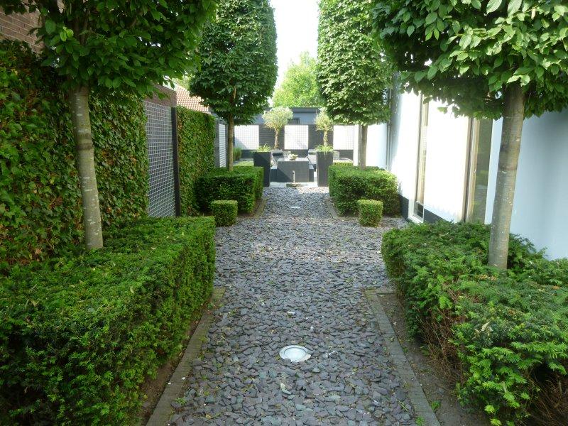 Renovatie achtertuin oude tonge tuin ontwerp for Tuin beplanten
