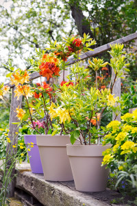 tuinplant_vd_maand2