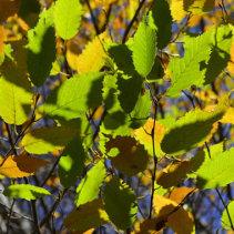 Planten in november: de beuk er in