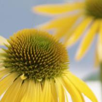 Spectaculaire vaste planten in het zonnetje