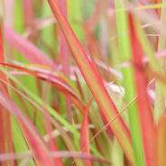 Siergrassen zetten je tuin in beweging